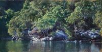 Winter Afternoon, Smiths Creek (Hawkesbury 16) by A.J. Taylor contemporary artwork painting