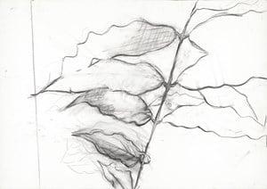 Leaves 181015 葉子181015 by Jeng Jundian contemporary artwork
