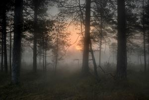 #11798-3868 by Todd Hido contemporary artwork photography