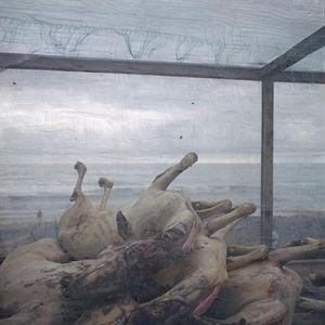 Carcasses de chèvres by Denis Dailleux contemporary artwork photography