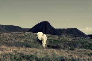 Horses & Canaries by Robert Zhao Renhui contemporary artwork
