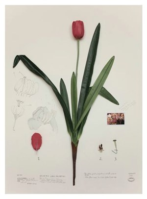 Herbal plants artificiales, elephant lotus by Alberto Baraya contemporary artwork