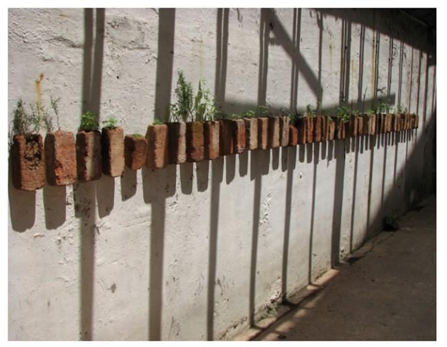 A horta da casa  by Brígida Baltar contemporary artwork