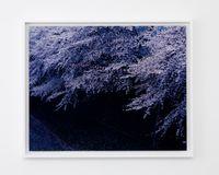 Nakameguro, Tokyo by Chikashi Suzuki contemporary artwork photography, print