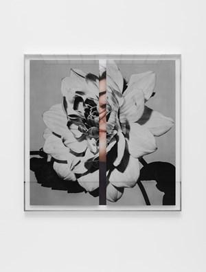 Hollywood Dahlia by Kathryn Andrews contemporary artwork