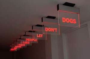 dogs don't let people take them home no more by Darren Bader contemporary artwork