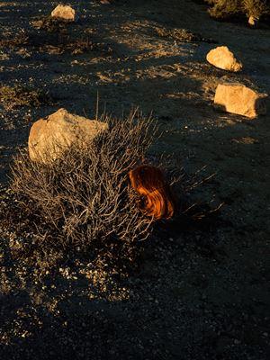 Wig, Dead Sea by Tania Franco Klein contemporary artwork