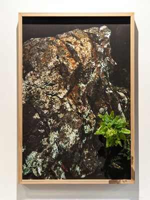 Forest6090 by Trevor Yeung contemporary artwork