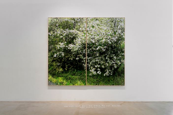 Honggoo Kang, Study of Green-Seoul-Vacant Lot-Eunpyeong-gu(2019). Pigment print and acrylic on canvas. 190 x 200 cm. Courtesy ONE AND J. Gallery.