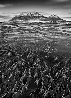 Marine algae, known as giant bladder kelp, the mountains of Steeple Jason Island are visible in the background, Falkland Islands by Sebastião Salgado contemporary artwork