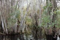 Untitled #1 (Swamps) by Catherine Opie contemporary artwork photography, print