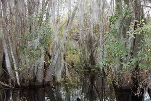 Untitled #1 (Swamps) by Catherine Opie contemporary artwork
