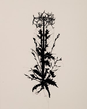 Urpflanze street plant #6 (Tarin Kot, Camp Holland, Diesel Farm Road, Afghanistan, collected by Ben Quilty, 28.10.2011)  by Caroline Rothwell contemporary artwork drawing, textile, textile, textile