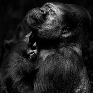 Serie Primates by Isabel Muñoz contemporary artwork