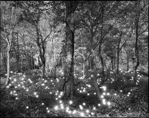 Photo Respiration Trees Shirakami #10 by Tokihiro Sato contemporary artwork