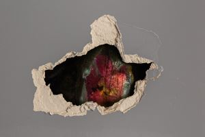 Swamp Intelligence (installation view) by Nomeda & Gedminas Urbonas contemporary artwork