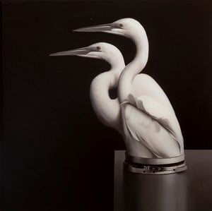 Egrets with Pressure Seal by Sam Leach contemporary artwork