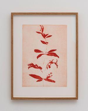 Rubia 1 by Gal Leshem contemporary artwork
