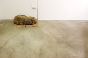 Dog by Liao Chien-Chung contemporary artwork
