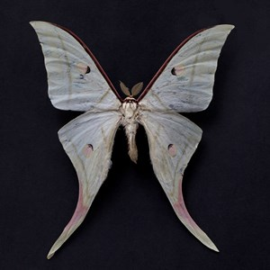 Butterfly #16 by Krisada Suvichakonpong contemporary artwork