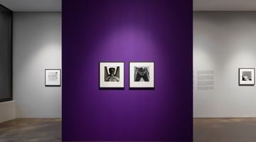 Contemporary art exhibition, Robert Mapplethorpe, Robert Mapplethorpe: More Life at Kukje Gallery K2 (Seoul) and Busan