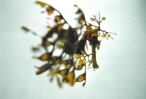 Leaves swim (SHI/F 010) by Shimabuku contemporary artwork