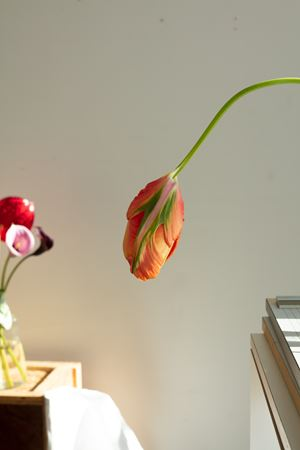 hanging tulip by Wolfgang Tillmans contemporary artwork