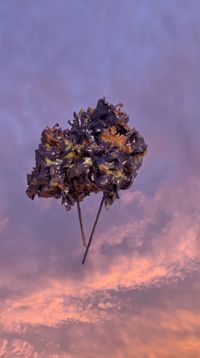 Sky Sculpture (Peonies/Vienna, May 19, 20:34 CEST) by André Hemer contemporary artwork moving image