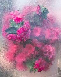 Azaleas, Pressing, Rockport, Maine by Cig Harvey contemporary artwork photography