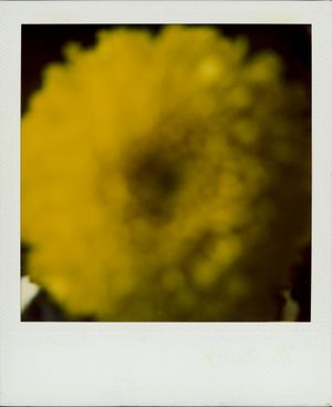 Untitled (Dahlia) by Walter Schels contemporary artwork photography