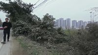 Circulation: Tianfu District by Lin Wei-Lung contemporary artwork moving image