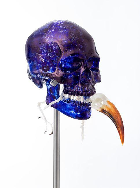 Skull with Von der Decken's Hornbill by Jan Fabre contemporary artwork
