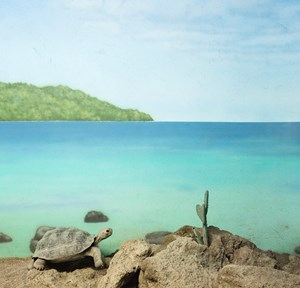 Turtle and blue sea by Eric Pillot contemporary artwork