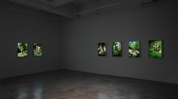 Contemporary art exhibition, Park Chan-kyong, Citizen's Forest at Tina Kim Gallery, New York