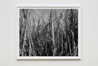 Sugarcane I by Dawoud Bey contemporary artwork photography