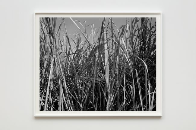 Sugarcane I by Dawoud Bey contemporary artwork