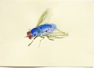 Blue Bottle Fly by Michelle Charles contemporary artwork