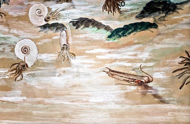 Scheme O by Sofia Borges contemporary artwork