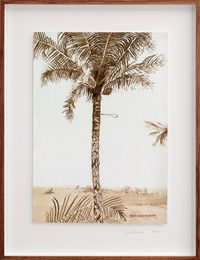 Postcards from Africa: Man climbing palm by Sue Williamson contemporary artwork works on paper