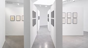 Contemporary art exhibition, Dom Sylvester Houédard, tantric poetries at Lisson Gallery, London