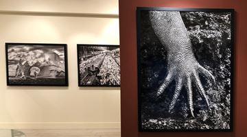 Contemporary art exhibition, Sebastião Salgado, Subtle Images of the Natural World at Sundaram Tagore Gallery, Madison Avenue, New York