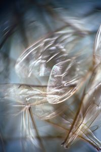 Eidolon #3 by Anne Noble contemporary artwork photography