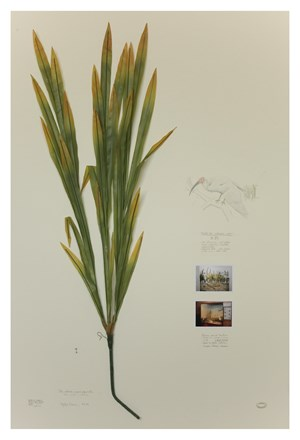 Herbario de plantas artificiales, lirio Ibis by Alberto Baraya contemporary artwork