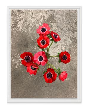Anemones March by Wolfgang Tillmans contemporary artwork