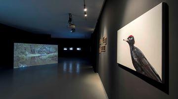 Contemporary art exhibition, Elmas Deniz, Three Hues of Water at Zilberman Gallery, Istanbul