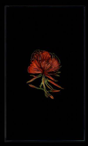 Infinite Herbarium Morphosis #3 by Caroline Rothwell contemporary artwork moving image