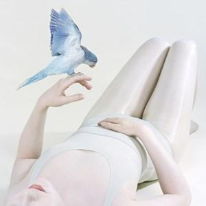 Blue Bird by Petrina Hicks contemporary artwork