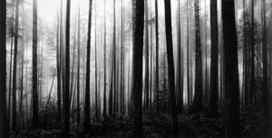 Untitled (Forest After Newman) by Robert Longo contemporary artwork
