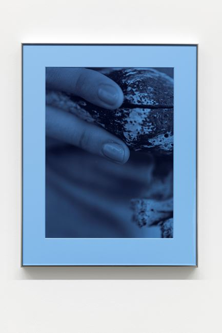 Pacific Driftwood (Blue Filter) by Josephine Pryde contemporary artwork