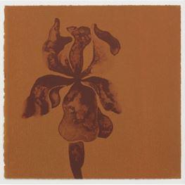 Ruth Asawa contemporary artist